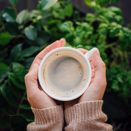 Cup of coffee in hands with home plant background. Warm sweater, cozy autumn concept