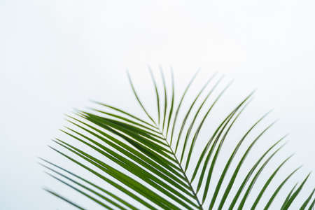 Green palm leaf on light grey background Standard-Bild