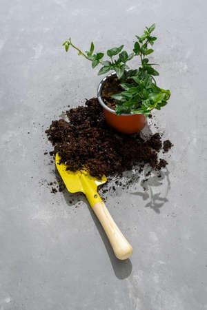 Home gardening set of tools. Soil, plant pots, gloves, shovel, rake, ivy on concrete background Standard-Bild