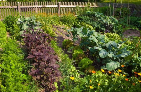 vegetable plants: kitchen garden