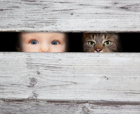 Malý chlapec a kočka hledá mezi mezerou desek