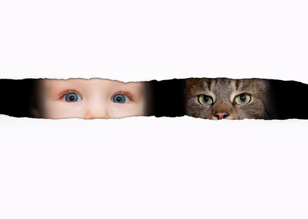 sincere: little boy and the cat looking between the gap Stock Photo
