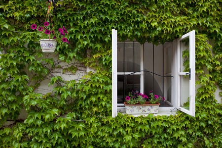 groen overwoekerd huis met het raam open