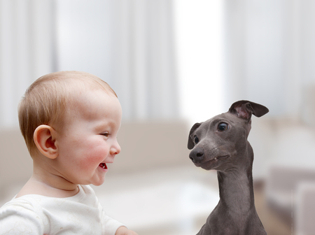 animal health: little boy and a dog playing in the room