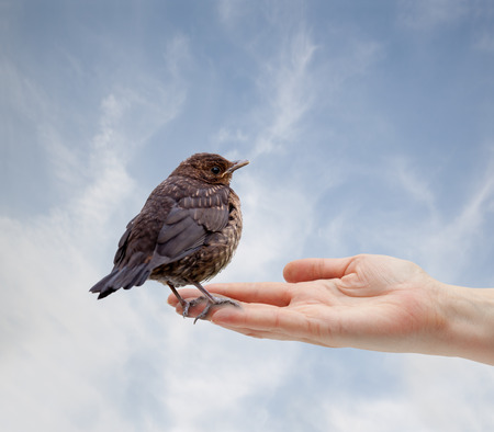 A little bird sitting on a human hand