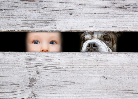 little boy and the dog looking between the gap of the boards Stock Photo