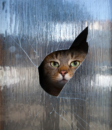 tabby cat looks through a broken window