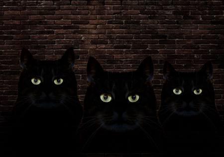 Three black cats at night Stock Photo