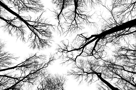 black and white photo trees silhouettes
