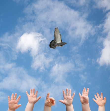 hands and flying bird Stock Photo