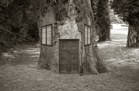 Funny shot of an old house in a tree