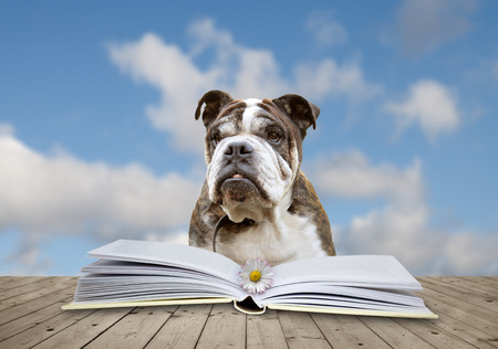 book with a flower and dog Stock Photo