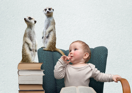 humorous photograph of little boy and surikat Stock Photo