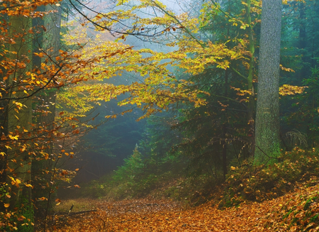 autumn forest in mist Stock Photo