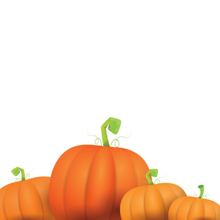 pumpkin patch: autumn vector pumpkins border design template for banners and thanksgiving day backgrounds. vector pumpkins frame isolated on white