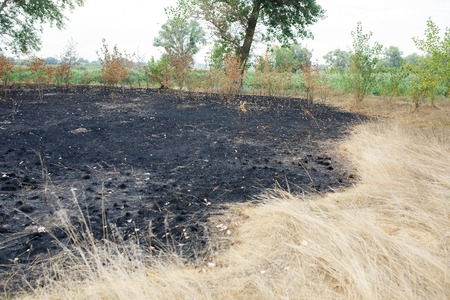 Forest fires - dry grass and bushes burned in the wood.