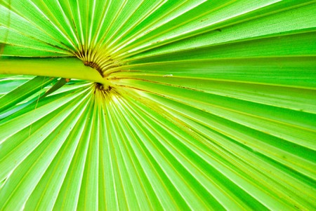 texture of green palm leaf background photo