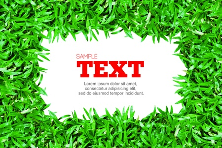 green grass frame with text area copyspace isolated on white background photo