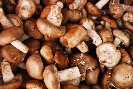 Pile of Chinese mushroom in fresh market , asian style vegetable , closeup background photo