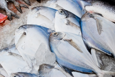 variety of fresh fish seafood in market closeup background , Asia , Thailand photo