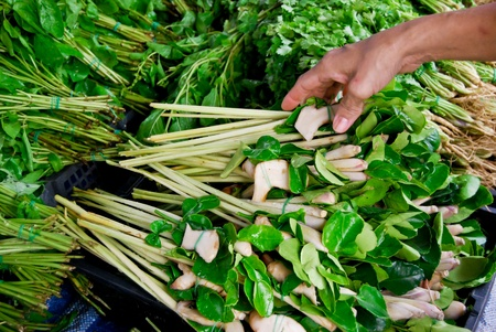 lemongrass and kaffer lime leaf in fresh market , Asia , Thailand photo