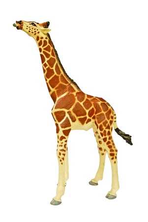 Giraffe isolated on white background with the high resolution and beautiful color photo