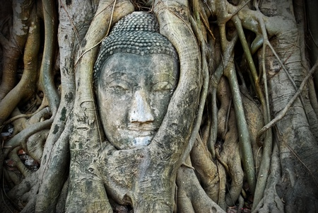 Head of Buddha made from sandstone in the overgrown tree , Asia , Thailand photo