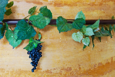 ivy and grapes vine on vintage orange wall background photo
