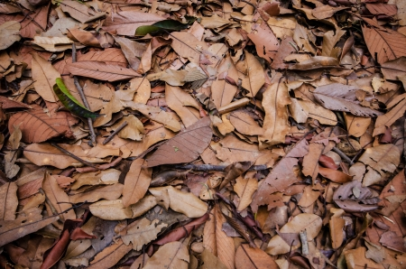 Dry leaf on the ground , Nature background and texture photo