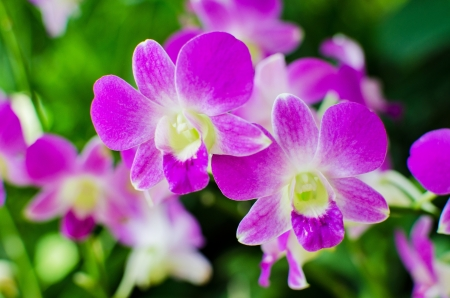 Beautiful bright orchid flowers in Botanical garden , close-up details photo
