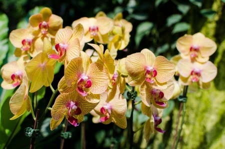 carpel: Bright yellow orchids flower in Botanical garden , close up details