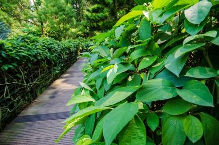 散歩道パスを通じて、静かな緑豊かな植物園