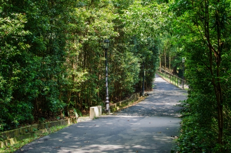 garden scenery: Walkway Path through a Tranquil Verdant Botanical Garden