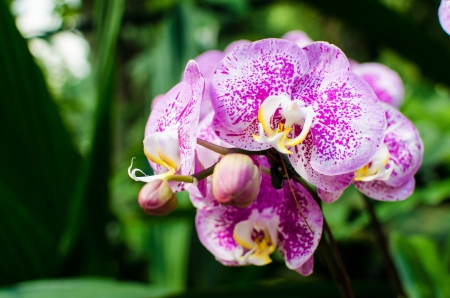 carpel: Beautiful bright orchid flowers in Botanical garden , close-up details