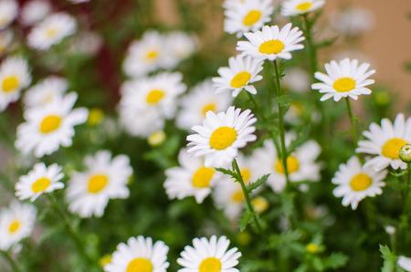 sidewalk sale: Close up of white flowers in flower shop in Japan