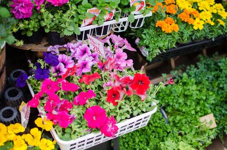 sidewalk sale: Variety of colorful flowers in flower shop in Japan