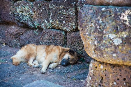 warm home: Brown dog sleep on rock stone floor in the park