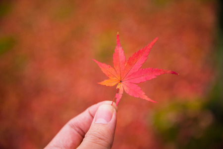 Hand holding red color leaf on colorful leaves background in autumn season