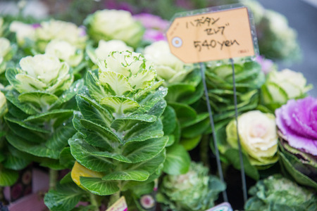 botan: Beautiful and colorful small flower in Japan