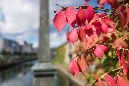 Closeup of Autumn leaves in Japanese garden Stock Photo