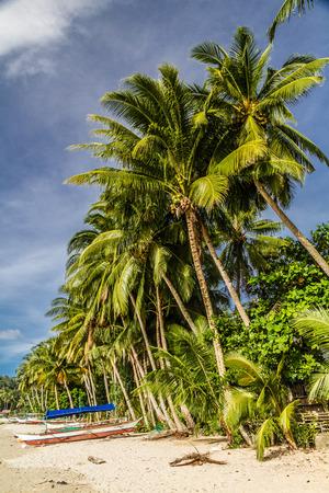 boast: Bella Port vuota Barton Spiaggia Vanto e palme, Palawan, Filippine