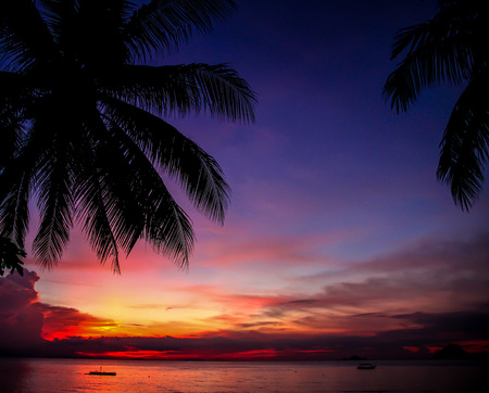 perhentian: Colorful sunset with palm tree silhouette at beach - Malaysia