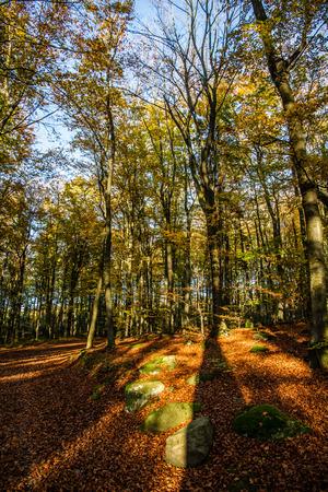 beechwood: Beautiful Colorful Autumn Beeches on Sun with Blue Sky - Voderady Beechwood, Czech Republic Stock Photo