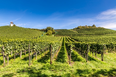 View of Beautiful Winzerturm Tower and Perfect Vineyard -Haltnau Winery,Meersburg,Lake Constance,Germany,Europe