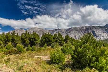 jure: Biokovo Mountain Nature Park And Trees From Makarska Riviera-Biokovo, Dalmatia, Croatia, Europe