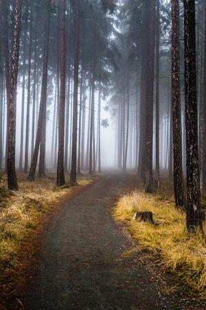 Mysterious Misty Forest - Krusna Hora, Czech Republic 版權商用圖片
