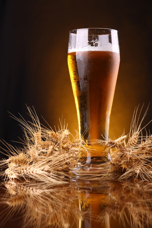 Tall glass of light beer with barley ears over a dark background lit yellow photo