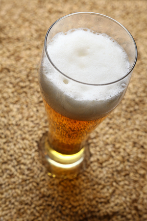barley malt: Tall glass of light beer standing on barley malt grains Stock Photo