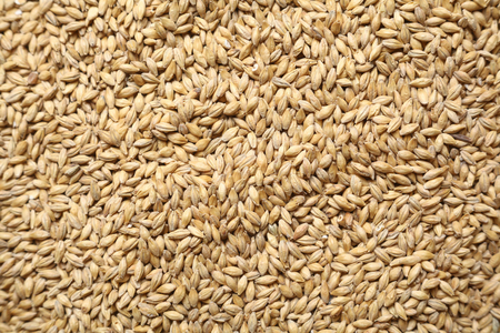 barley malt: Pile of barley malt grain forming a uniform background texture