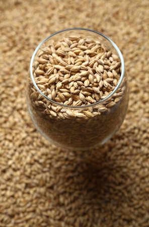barley malt: Beer glass full of barley malt standing on malt grains